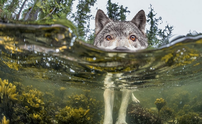 national-geographic-12