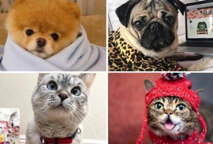 Cani e gatti influencer su Facebook e Instagram: le nuove star sui social