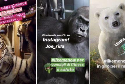 #LikeMeKnow del WWF: una tigre, un gorilla e un orso sono influencers su Instagram per contrastare la loro estinzione