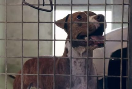 'Tu puoi farlo #apriilcancello' è la campagna social di Roma Capitale per l'adozione responsabile di un cane
